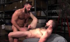 Muscly ass rimming bear